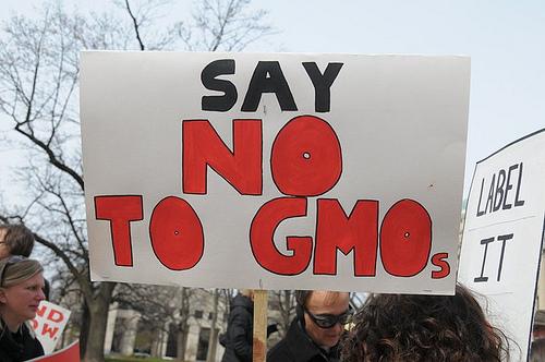Kontrowersje wokół GMO